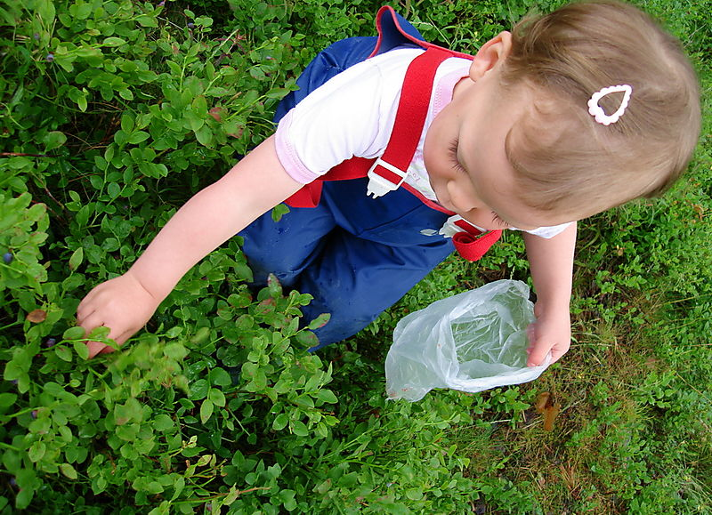Lilly picking berries