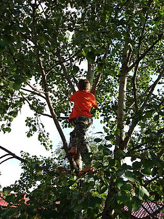 Sebastian climbing tree