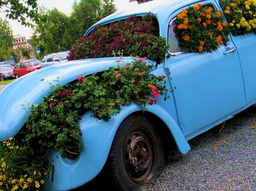 Blue_flower_car