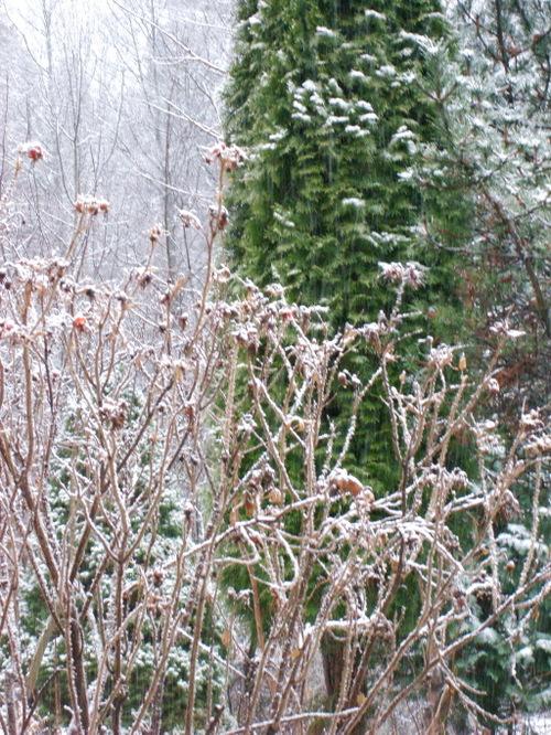 Snowy_scene_2