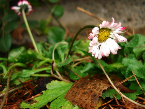 Winter_flower_2