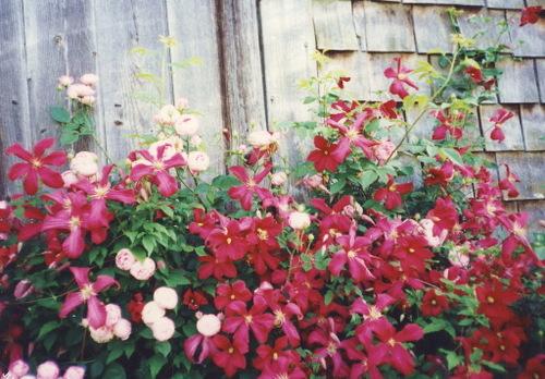 Moms_garden20001_edited1