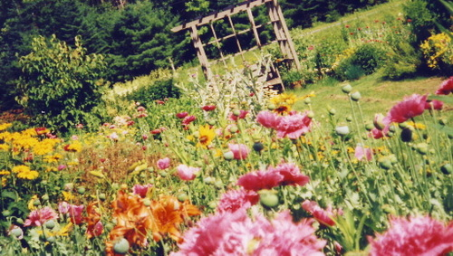 Moms_garden_2