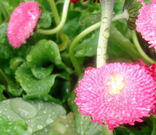 Plants_in_rain